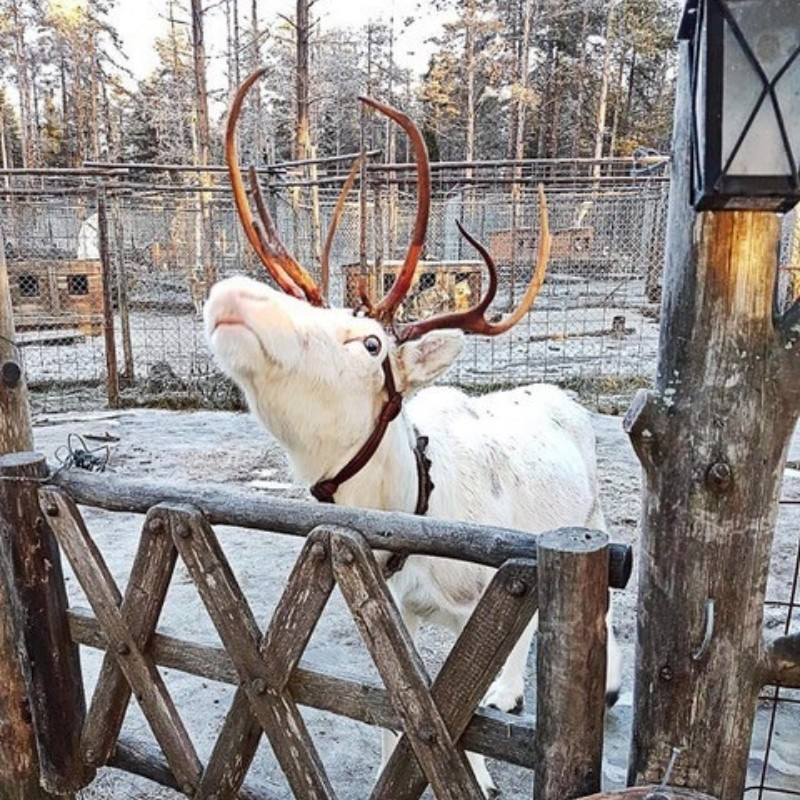 sweden-blog-gda-global-dmc-alliance-a journey-to-lapland-nordicways-prepares-exclusive-programmes-for-2019