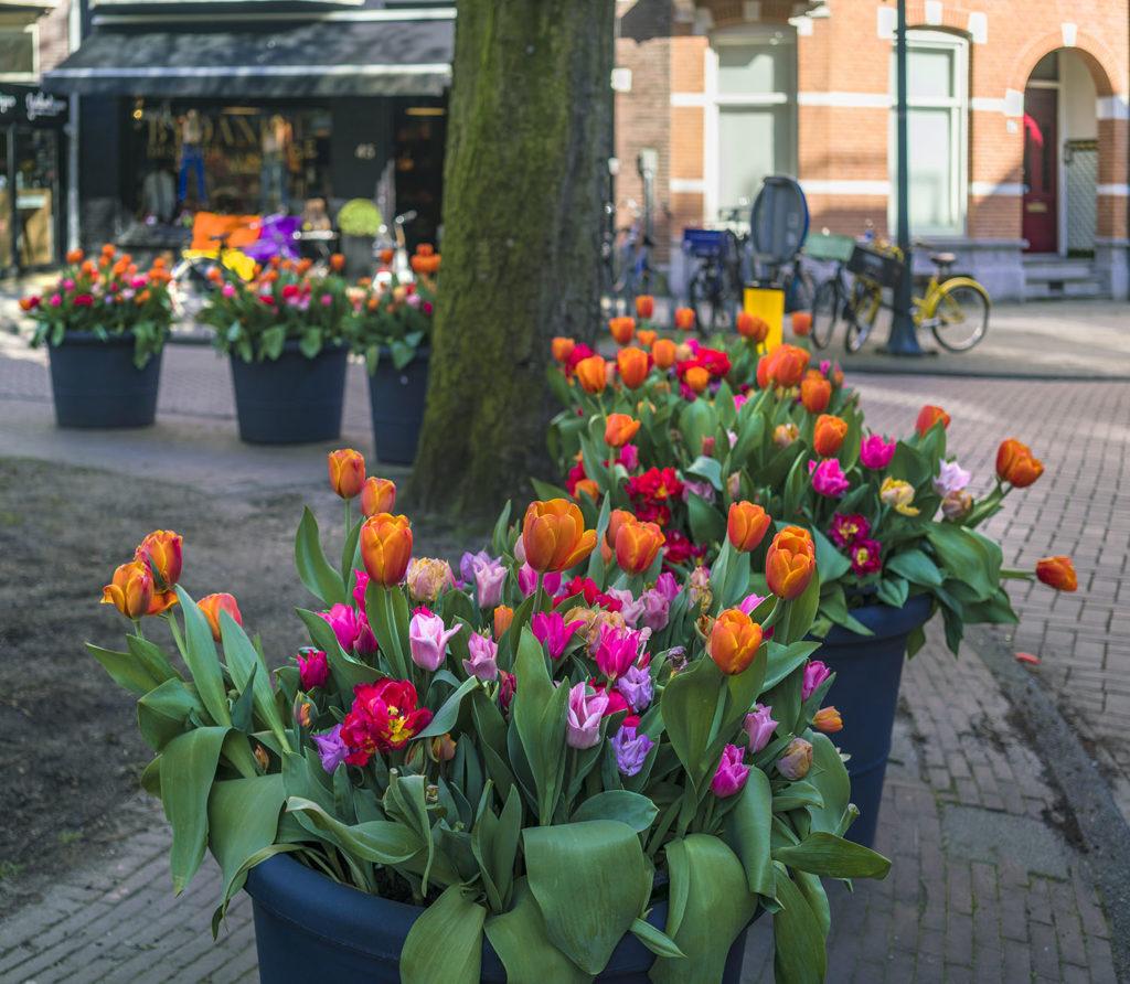 netherlands-gda-global-dmc-alliance-amsterdam-tulip-festival