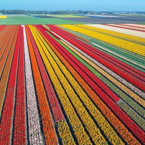 netherlands-gda-global-dmc-alliance-tulip-festival