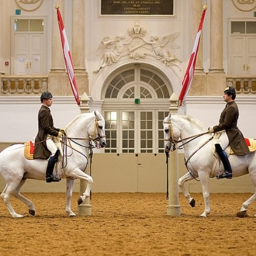 austria - imc international-featured-blog-spanish-horse