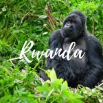 rwanda-gda-global-dmc-alliance-rwanda-events-eventprofs-meetings-incentives-conferences-africa