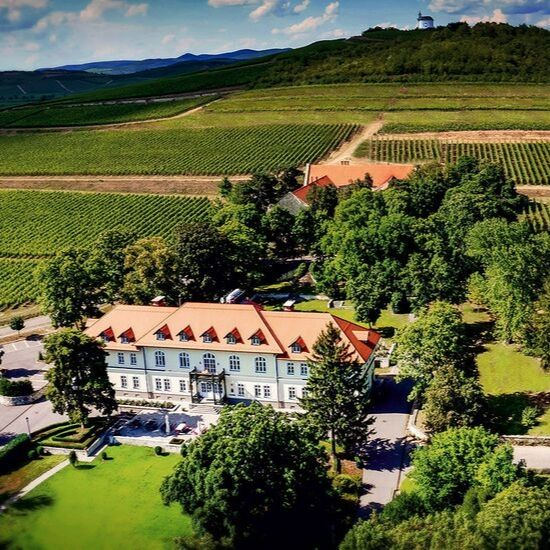 hungary-tojac-wine-tasting-gda-global-dmc-alliance-inspiration-travel-incentives-meetings-conferences-business-tourism-1