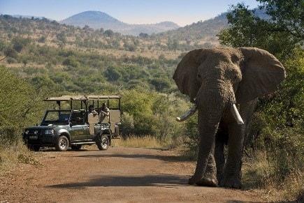 south-africa-gda-global-dmc-alliance-conference-safari-bakubang-lodge GD-min